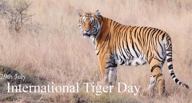 International Tiger Day - Images, Pictures & Wallpaper HD