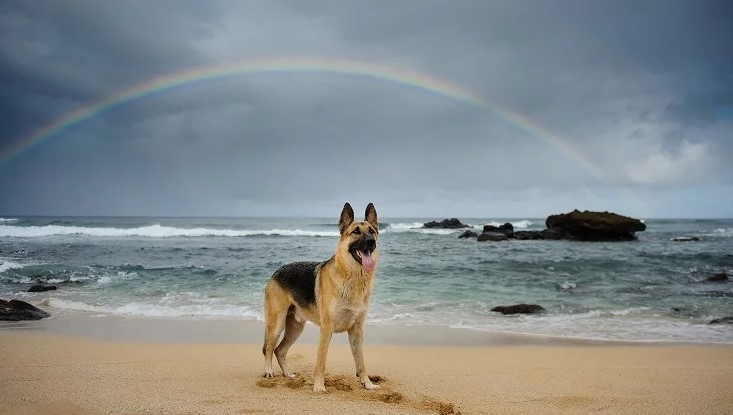 28th August Rainbow Bridge Remembrance Day 2019 Images, Pictures & Wallpaper