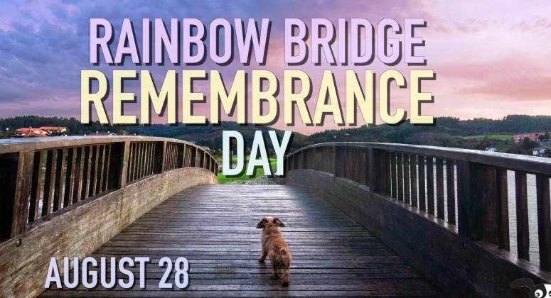 Happy Rainbow Bridge Remembrance Day 2019