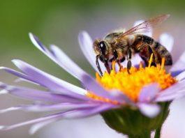 National Honey Bee Day – Happy World Honey Bee Day 2019