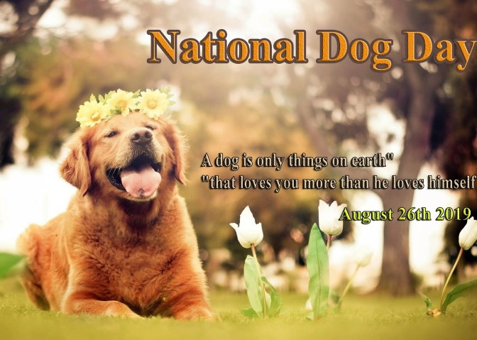 national dog day 2019 quotes