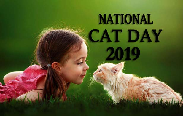 National Cat Day 2019