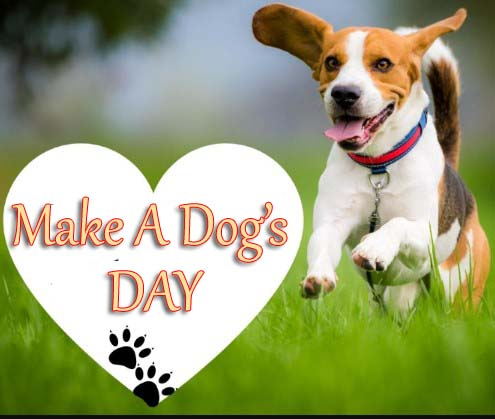National Make A Dog's Day 2019
