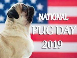 National Pug Day 2019