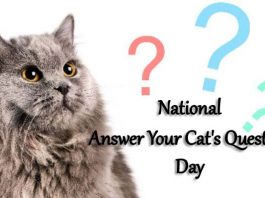 National Answer Your Cat's Questions Day