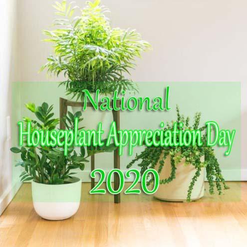National Houseplant Appreciation Day