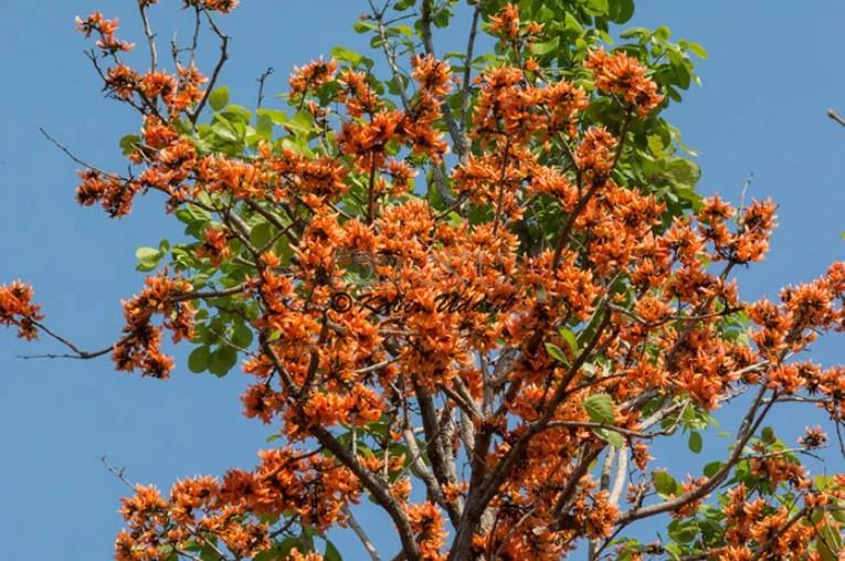 Happy Pohela Falgun Flower Picture